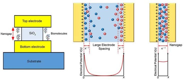 label-free nanogap biosensor2