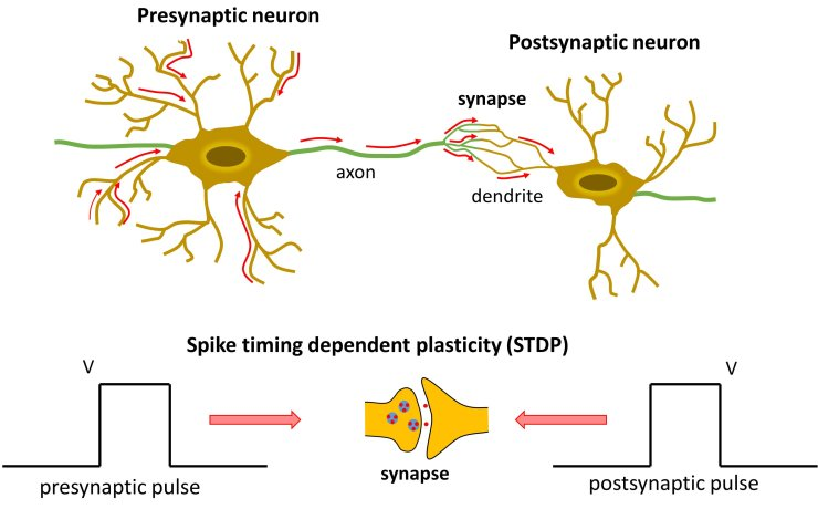 Neuronal STD_2